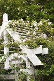 Arbor with blooming vine. Royalty Free Stock Images