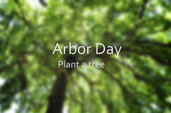 Arbor Day concept with blurred background image of tall tree can. Opy with added text stock photography