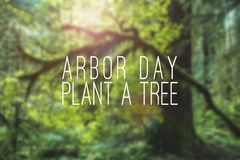 Arbor Day plant a tree mockup with forest. Or trees or green natural blurry backdrop or background. Holiday event concept royalty free stock images
