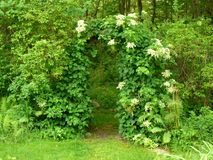 Arbor entrance into the forrest in Westport Massachusetts. This arbor way leads to a path to the forest behind the backyard in Westport, Massachusetts Stock Image