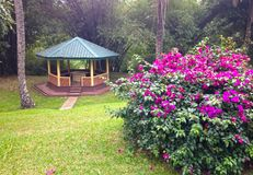 Arbor and flowering bush in Royal Botanical Garden. In Kandy Stock Images