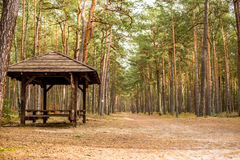 Arbor in the forest. On Sobieszewska island near Gdansk Royalty Free Stock Image