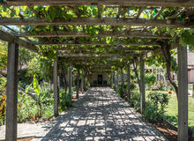 Arbor of Grape Vines Royalty Free Stock Image
