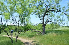 Arbor Hills Nature Preserve. A man walking the trails of the Arbor Hills Nature preserve in Plano, Texas, USA Stock Image