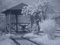 Arbor in infrared royalty free stock image