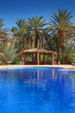 Arbor among palm trees in Morocco Royalty Free Stock Photography