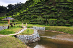 Arbor and riverside at tea plantation. Green hills covered with tea bushes Stock Photography