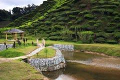 Arbor and riverside at tea plantation Stock Photography