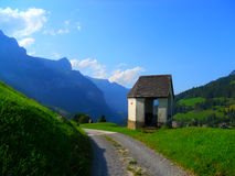 Arbor beside the road. In Swiss Alps, Engelberg, August 2014 royalty free stock image