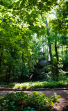 Arbor on the rocks. In the green summer forest cool Royalty Free Stock Image