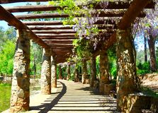 Arbor with Stunning Purple Wisteria: Araluen Botanic Park, Western Australia. Perspective view of a stone arbor with hanging purple wisteria, pond water and Stock Photo