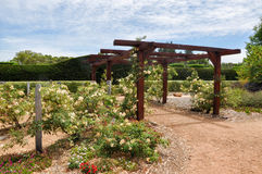 Arbor to Hedge Maze: Amaze'n Margaret River. MARGARET RIVER,WA,AUSTRALIA-JANUARY 16,2016: Arbor entrance to hedge maze in Amaze'n Margaret River's botanical Stock Photography
