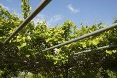 Arbor with Vines Stock Photos