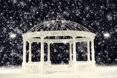 Arbor. In winter night park and the white snow falls sho Stock Photos