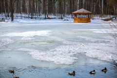 Arbor wooden on the lake with ducks in winter stock photo