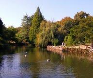 Arboratum Κωνσταντινούπολη Atatà ¼ rk Στοκ φωτογραφίες με δικαίωμα ελεύθερης χρήσης