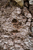 Arboreal termite nest Royalty Free Stock Photography
