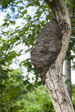 Arboreal Termite Nest Stock Images