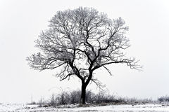 Arboreal in winter Stock Image