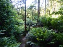 Arborescent папоротники и другие тропические заводы в саде Parque da Pena ботаническом, Sintra, Португалии Стоковые Изображения