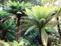 Arborescent папоротники и другие тропические заводы в саде Parque da Pena ботаническом, Sintra, Португалии Стоковое фото RF