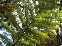 Arborescent папоротники и другие тропические заводы в саде Parque da Pena ботаническом, Sintra, Португалии Стоковое Изображение RF