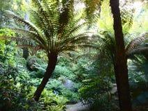Arborescent папоротники и другие тропические заводы в саде Parque da Pena ботаническом, Sintra, Португалии Стоковая Фотография RF