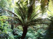 Arborescent папоротники и другие тропические заводы в саде Parque da Pena ботаническом, Sintra, Португалии Стоковые Фото