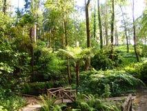 Arborescent папоротники и другие тропические заводы в саде Parque da Pena ботаническом, Sintra, Португалии Стоковое Фото