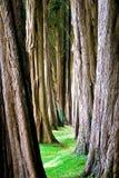 Arboreto Fotografia Stock