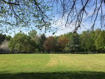 Arboreto através de um gramado segado Fotografia de Stock Royalty Free
