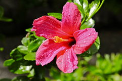 Arboreto de Waimea y jardín botánico fotografía de archivo