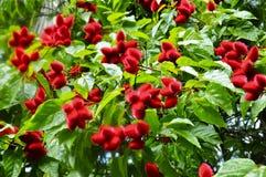 Arboreto de Waimea y jardín botánico imagenes de archivo