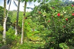 Arboreto de Waimea y jardín botánico foto de archivo libre de regalías