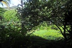 Arboreto de Waimea y jardín botánico fotografía de archivo libre de regalías