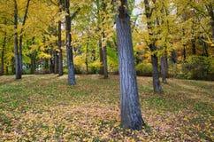 Arboreto di Autumn Leaves Virginia State Blandy Immagini Stock Libere da Diritti