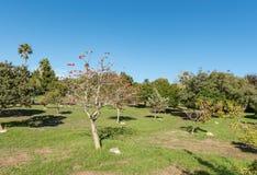 Arboreto na floresta de Majik em Durbanville no cabo ocidental fotografia de stock