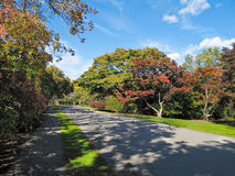 arboretum Arnold boston Obraz Stock