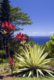Arboretum and Botanical Garden. On the Hana Highway, Maui, Hawaii, overlooking the Pacific Ocean Stock Images