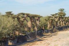 Arboretum Stock Photography