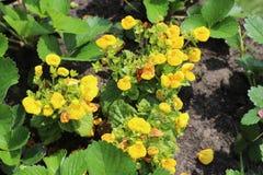 Arboretum flowers Stock Photo