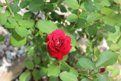 Arboretum flowers Stock Photography