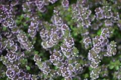Arboretum flowers Stock Image