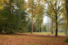 arboretum jesień drzew westonbirt Fotografia Stock