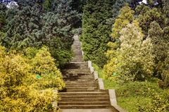 Plants in the arboretum near the stone stairs. In the arboretum near the stone stairs grow beautiful tropical plants Royalty Free Stock Images