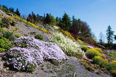 Arboretum in Paseka by Sternberk, Czech Republic. Former garbage dump backfilled with basaltic chippings gave rise to this beautiful arboretum with more than 3 Royalty Free Stock Images