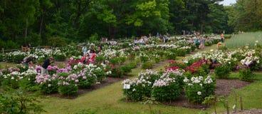 Arboretum peony garden Royalty Free Stock Photography