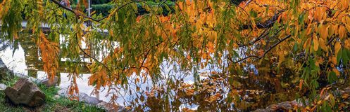 SOCHI, RUSSIA - NOVEMBER 12, 2017: Arboretum - pond in the Japanese garden Royalty Free Stock Photo