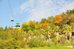 arboretum sochi Стоковая Фотография