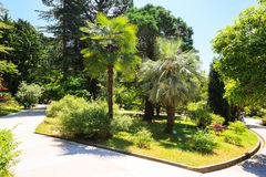 The arboretum in Sochi, Russia, summer day. Shady alley in the arboretum of Sochi, Russia, summer day Royalty Free Stock Photography